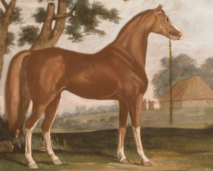 An Arabian belonging to Lord Grosvenor | George STUBBS, ANONYMOUS