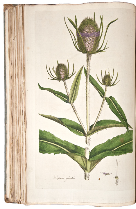 Flora Londinensis; or, Plates and Descriptions of such ...
