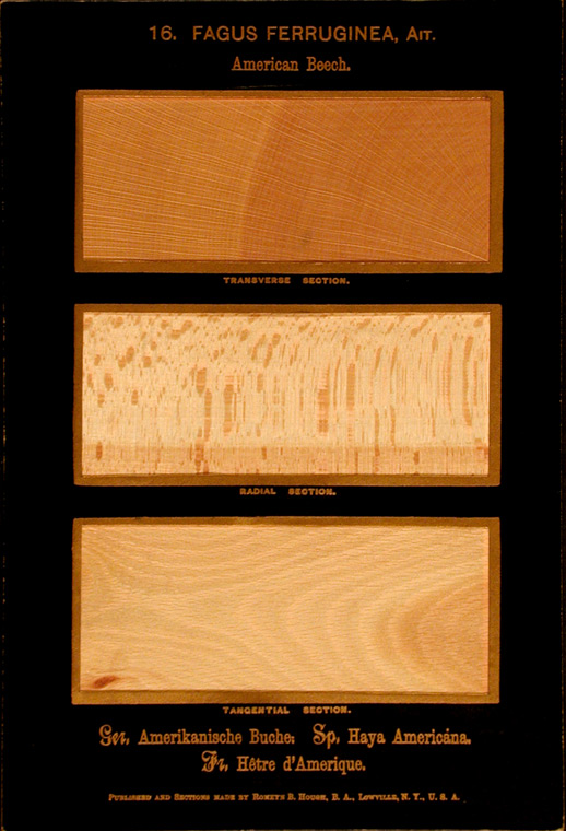 The American Woods, exhibited by actual specimens and with copious explanatory text. Romeyn Beck HOUGH.