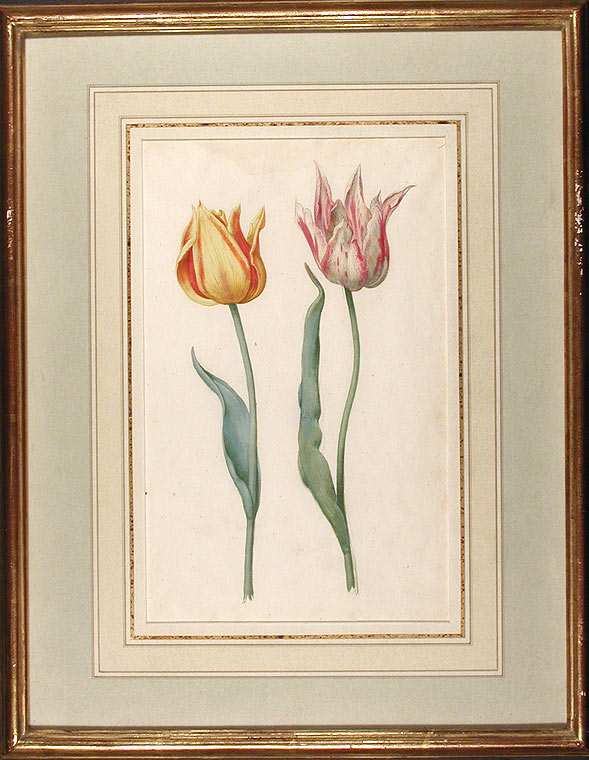 Tulipa var.' (A red and yellow tulip and a white and rose-coloured tulip). DUTCH SCHOOL, 17th century.
