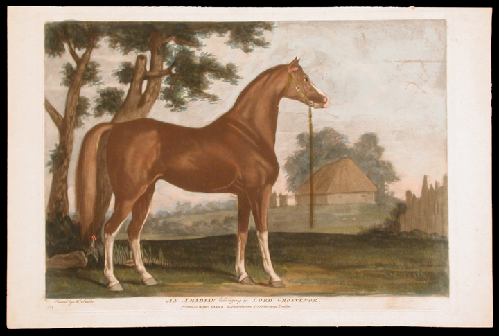 An Arabian belonging to Lord Grosvenor. George STUBBS, ANONYMOUS.