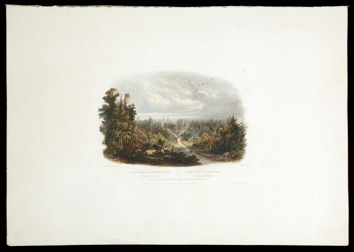 Forest Scene on the Tobihanna; Alleghany Mountains. Karl BODMER.
