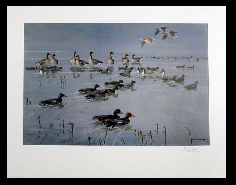 [Widgeon (Anas penelope) and Pinkfooted geese (Anser brachyrhynchus)]. After Sir Peter Markham SCOTT.