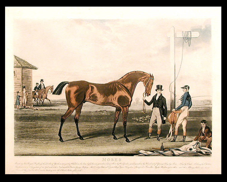 Moses Bred by His Royal Highness the Duke of York in 1819, got by Whalebone, his dam by Gohanna... In 1822 he won.. the Derby Stakes at Epsom beating Figaro, Hamden, Stamford, Marcellus, Mystic Wanton & five others... In 1823 at the Newmarket Craven Meeting won the Claret Stakes of 200Gs. each. James POLLARD.
