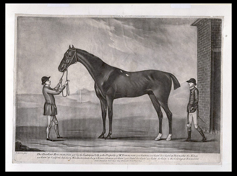 This excellent Horse Marquis, got by the Godolphin Colt is the Property of Mr. Vernon won 300 Guineas.... & the Gold Cup at Newmarket. After Francis SARTORIUS.