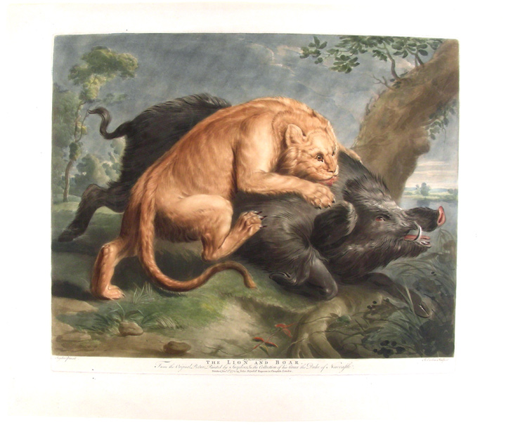 The Lion and the Boar. From the Original Picture, Painted by Snyders, in the Collection of His Grace the Duke of Newcastle. After Frans SNYDERS, Richard Earlom.