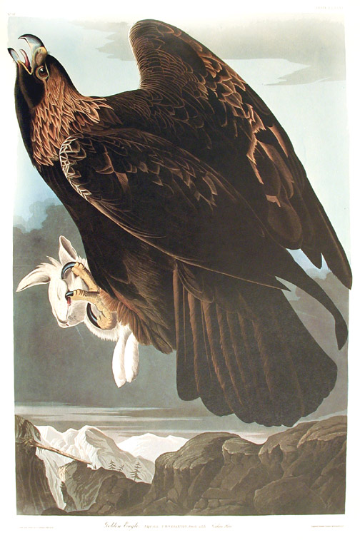 "Golden Eagle. From ""The Birds of America"" (Amsterdam Edition). John James AUDUBON."