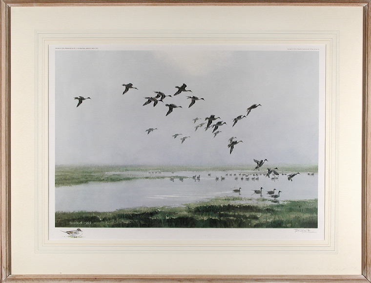 Pintails on a Hazy Day. After Sir Peter Markham SCOTT.