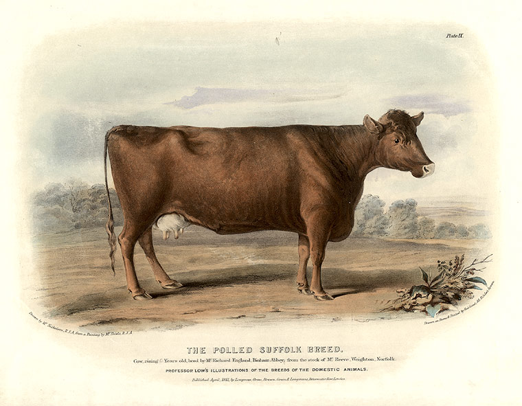 The Polled Suffolk Breed. David LOW.