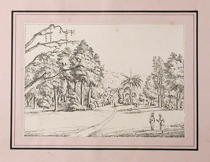 A series of three views of the Botanic Garden on the island of St. Vincent, West Indies. The Rev. Lansdown GUILDING, artist.