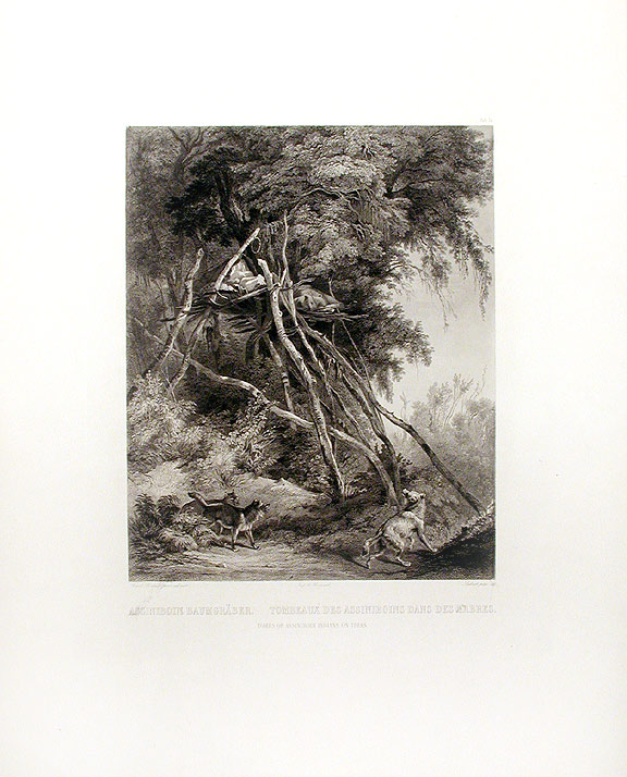 Tombs of Assiniboin Indians on Trees. Karl BODMER.