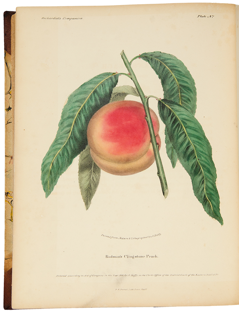 The Orchardist's Companion a quarterly journal, devoted to the history, character, properties, modes of cultivation, and all other matters appertaining to the fruits of the United States, embellished with richly colored designs of the natural size, painted from the actual fruits when in their finest condition. Alfred HOFFY, fl.