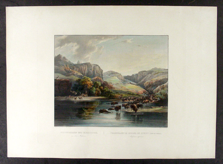 Herds of Bison and Elks on the upper Missouri. Karl BODMER.