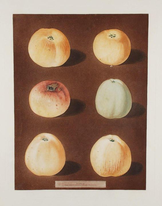 [Apples] [Striped Holland Pippin; Marygold Apple; Sullenworth's Rennet Apple; Beauty of Kent]. After George BROOKSHAW.
