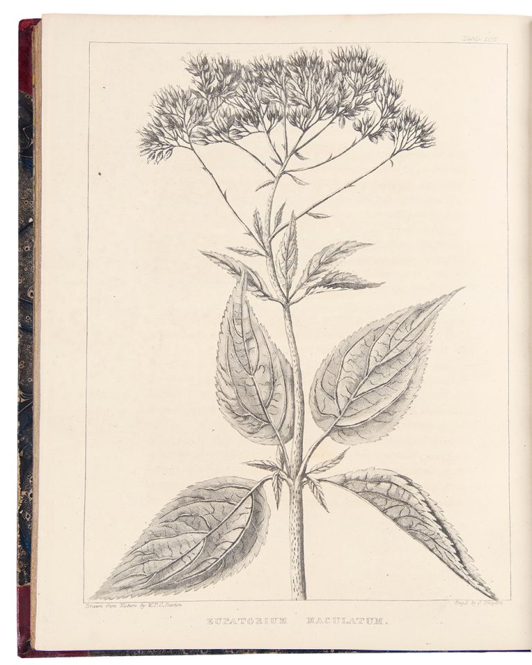 A Flora of North America, illustrated by coloured figures drawn from nature. William Paul Crillon BARTON.