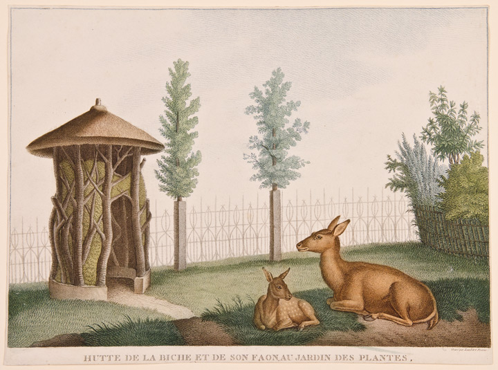 [Set of four prints of animals in the 'Jardin des Plantes' in Paris]. After Nicolas HUET.