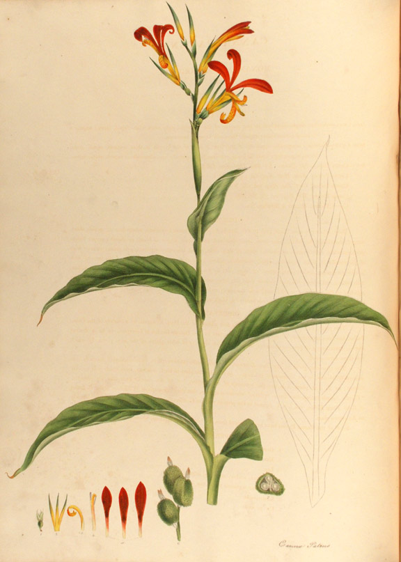 Monandrian Plants of the Order Scitamineae, chiefly drawn from living specimens in the Botanic Garden at Liverpool. William ROSCOE.