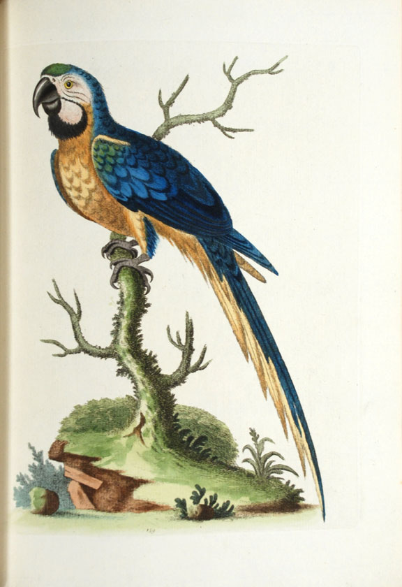 A Natural History of Uncommon Birds, and of Some Other Rare and Undescribed Animals. George EDWARDS.