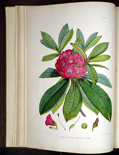 The Rhododendrons of Sikkim-Himalaya; being an account, botanical and geographical of the Rhododendrons recently discovered in the mountains of eastern Himalaya, from drawings and descriptions made on the spot, during a government botanical mission to that country, by Joseph Dalton Hooker... Edited by Sir W.J. Hooker. Sir Joseph Dalton HOOKER.