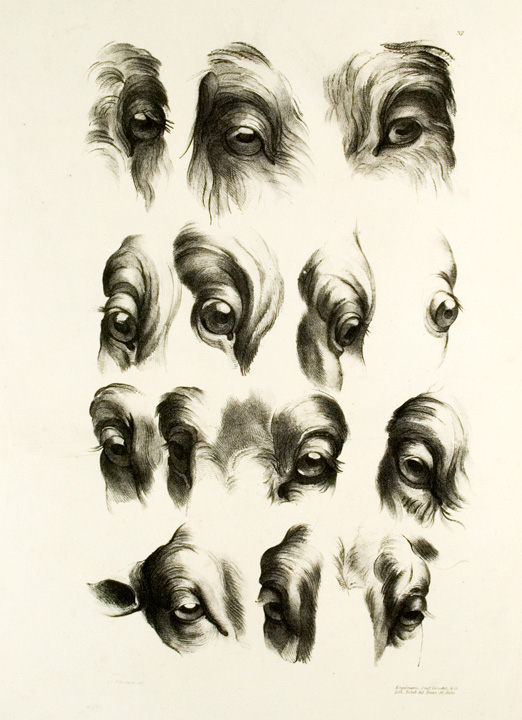 [Illustration of 14 Goat, Sheep and Ram Eyes]. After Charles LE BRUN, - After LANGLOIS.