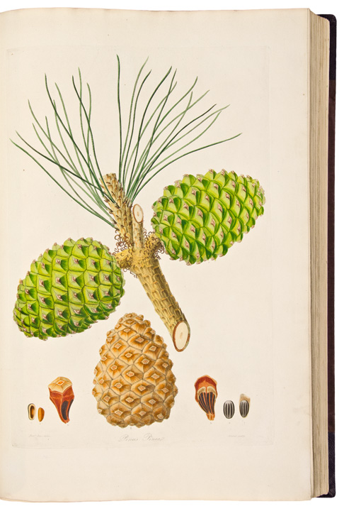 A Description of the Genus Pinus, with directions relative to the cultivation, and remarks on the uses of the several species: also descriptions of many other new species of the family Coniferae. Plates. Aylmer Bourke LAMBERT.