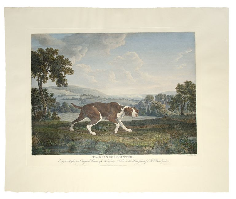 The Spanish Pointer, Engraved after an Original Picture of Mr. George Stubbs, in the Possession of Mr. Bradford. William WOOLLETT, after George Stubbs.
