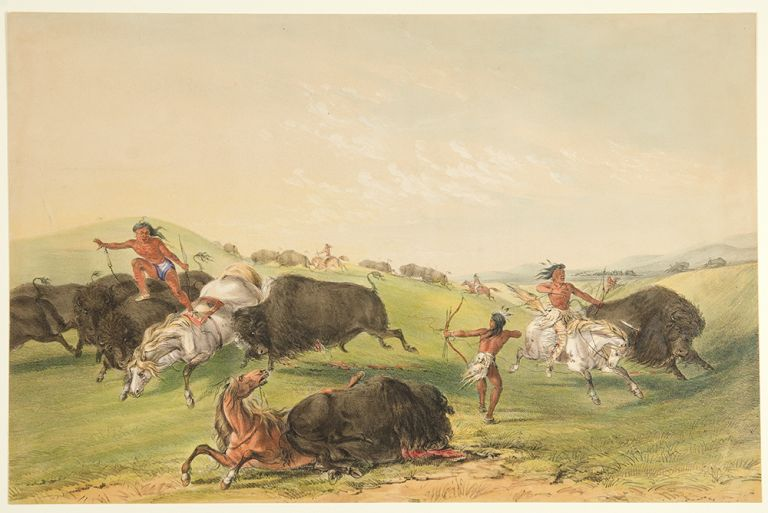 Buffalo Hunt, Chase. George CATLIN.