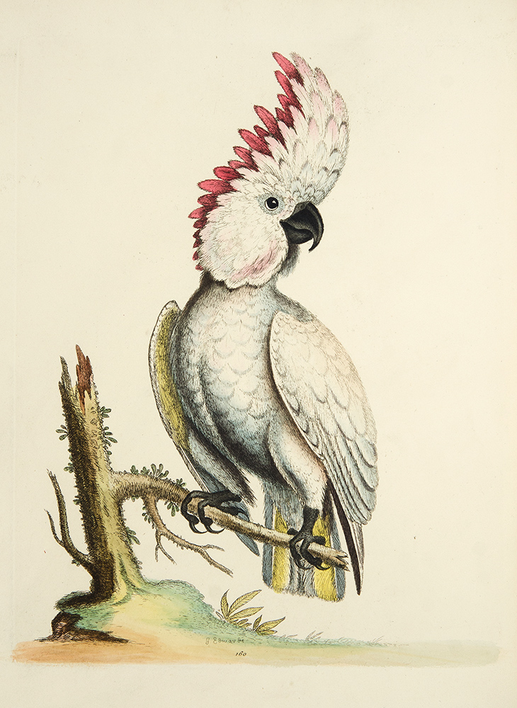 A Natural History of Uncommon Birds, and of Some Other Rare and Undescribed Animals ... [With:] Gleanings of Natural History Exhibiting Figures of Quadrupeds, Birds, Insects, Plants, &c. George EDWARDS.