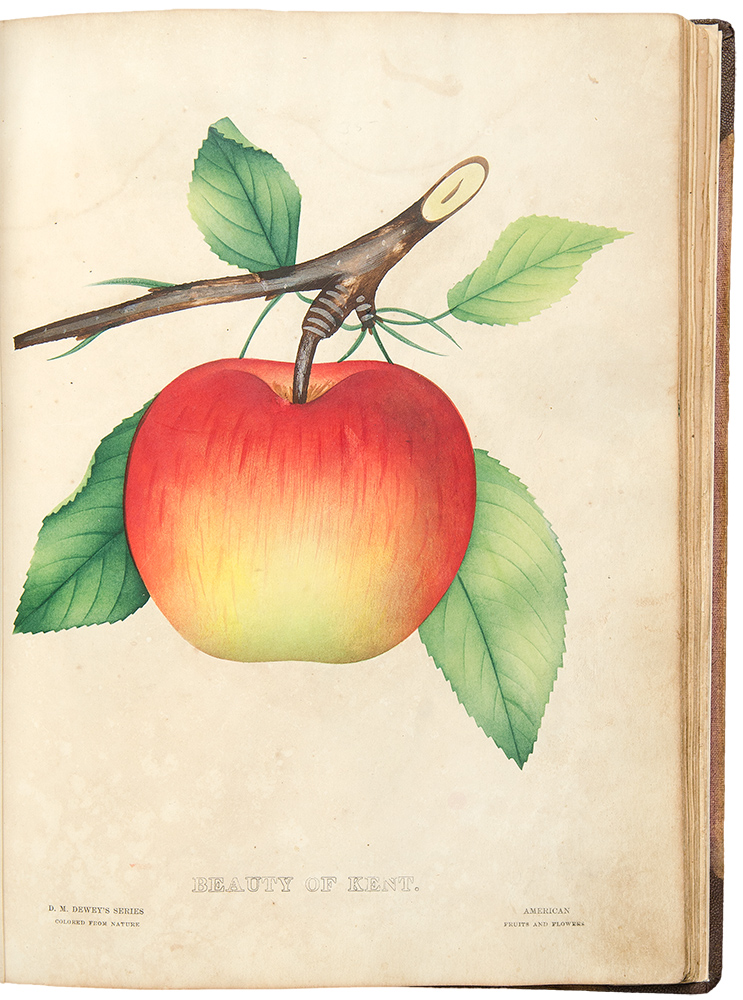 The Nurseryman's Specimen Book of American Fruits, Flowers, Ornamental Trees, Shrubs, Roses &c. Rochester Lithographing Company, successors to D. M. Dewey's American Fruit & Flower Plates. POMOLOGY, HORTICULTURE - Rochester Lithographing Co.