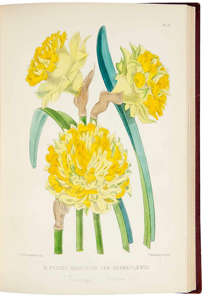 The Narcissus: its History and Culture with coloured plates and descriptions of all known species and principal varieties ... to which is added ... a scientific review of the entire genus, by J.G. Baker. Frederick William BURBIDGE.
