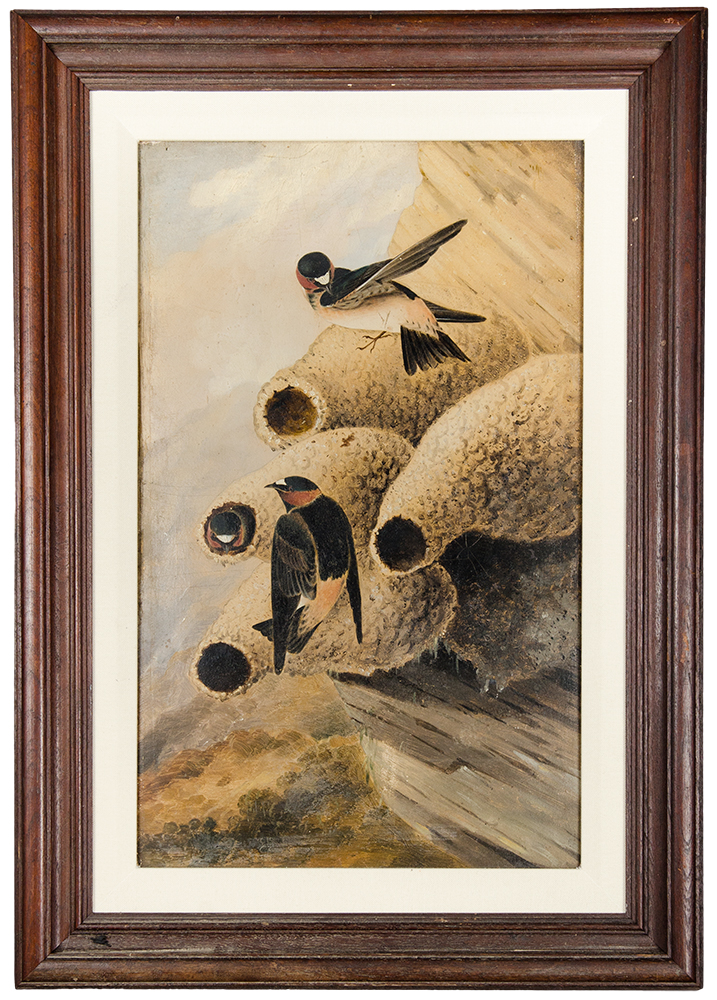 Republican Cliff Swallow. John James AUDUBON, after - Joseph Bartholomew KIDD.
