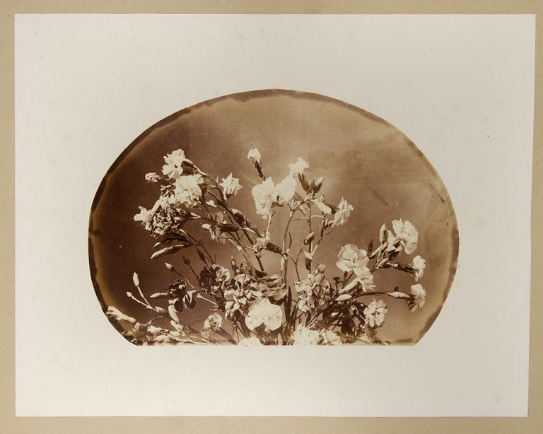 Album of 25 albumen photographs of flower arrangements. Adolphe BRAUN.