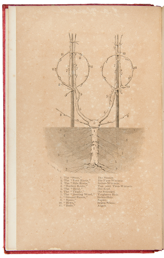 The Vine-Dresser's Manual, an Illustrated Treatise on Vineyards and Wine-Making. Charles REEMELIN.
