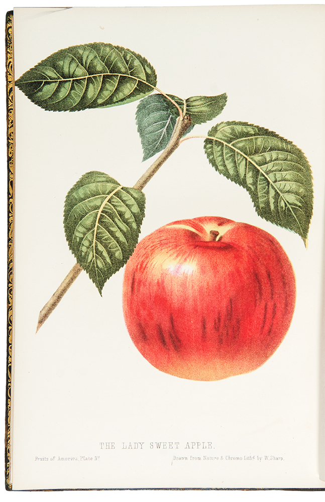 The Fruits of America, containing richly colored figures and full descriptions of all the choicest varieties cultivated in The United States. Charles Mason HOVEY.