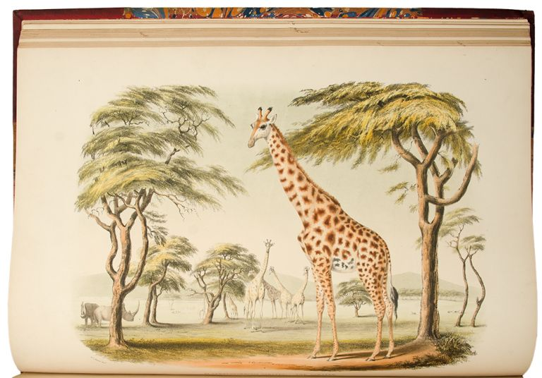 Portraits of the Game and Wild Animals of Southern Africa, delineated in their native haunts, during a hunting expedition from the Cape Colony as far as the Tropic of Capricorn, in 1836 and 1837, with sketches of the field sports. By Captain W. Cornwallis Harris... drawn on stone by Frank Howard. Sir William Cornwallis HARRIS.