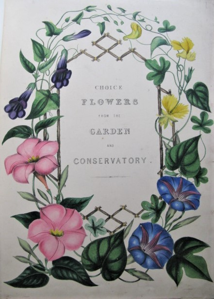 Choice Flowers: A Collection of Drawings of Favourite Flowers, from the Garden and the Conservatory. MAY, nn, liza, illiam.