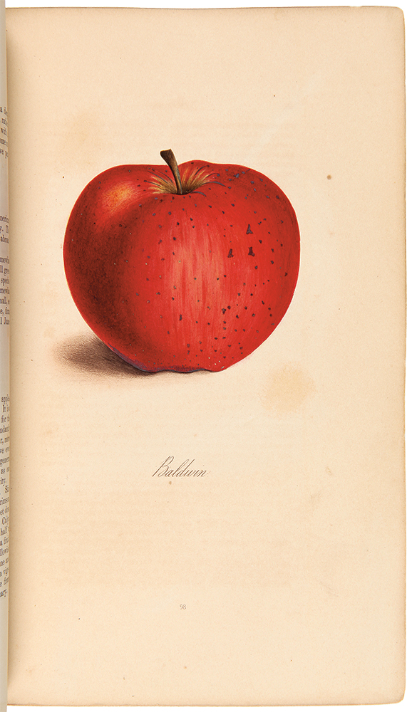 The Fruits and Fruit Trees of America; or, The Culture, Propagation, and Management, in the Garden and Orchard, of Fruit Trees generally. ANDREW JACKSON DOWNING.
