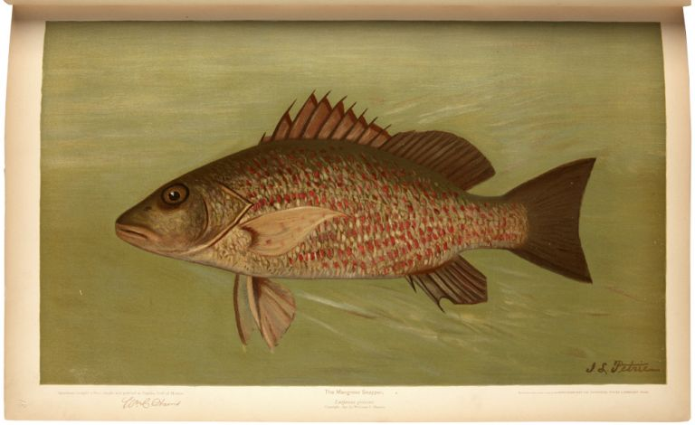 The Fishes of North America that are captured on Hook and Line. With eighty colored plates made from oil portraits of living fishes before their color tints had faded. William C. HARRIS.