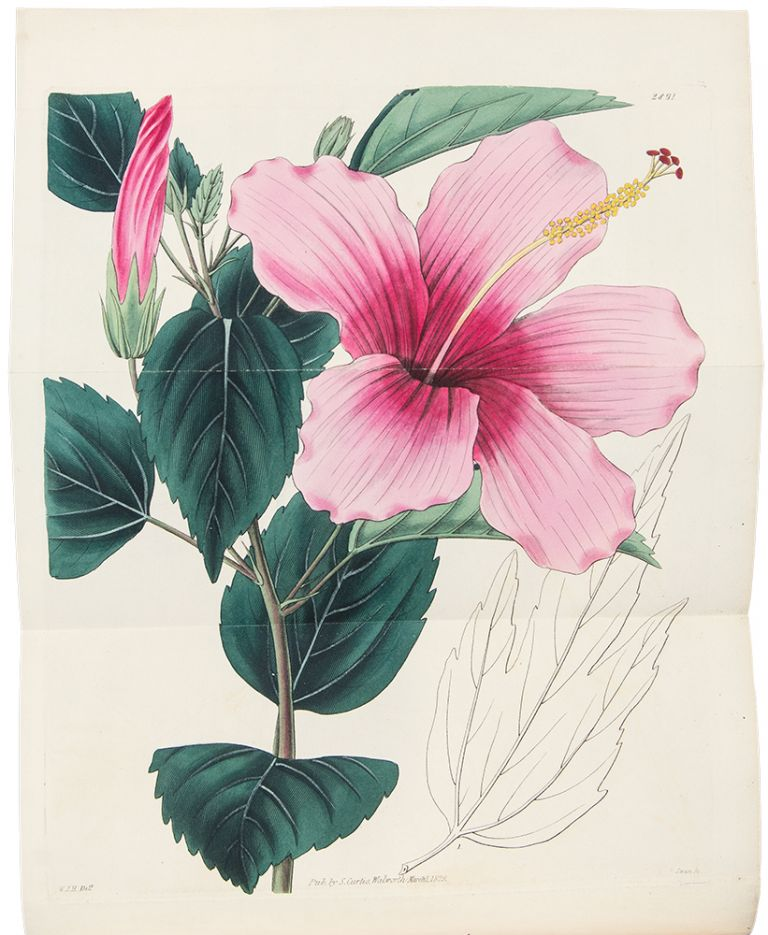 Curtis's Botanical Magazine or Flower Garden Displayed Vol. III of the New Series or Vol. LVI of the whole Work. Samuel CURTIS, WILLIAM JACKSON HOOKER.