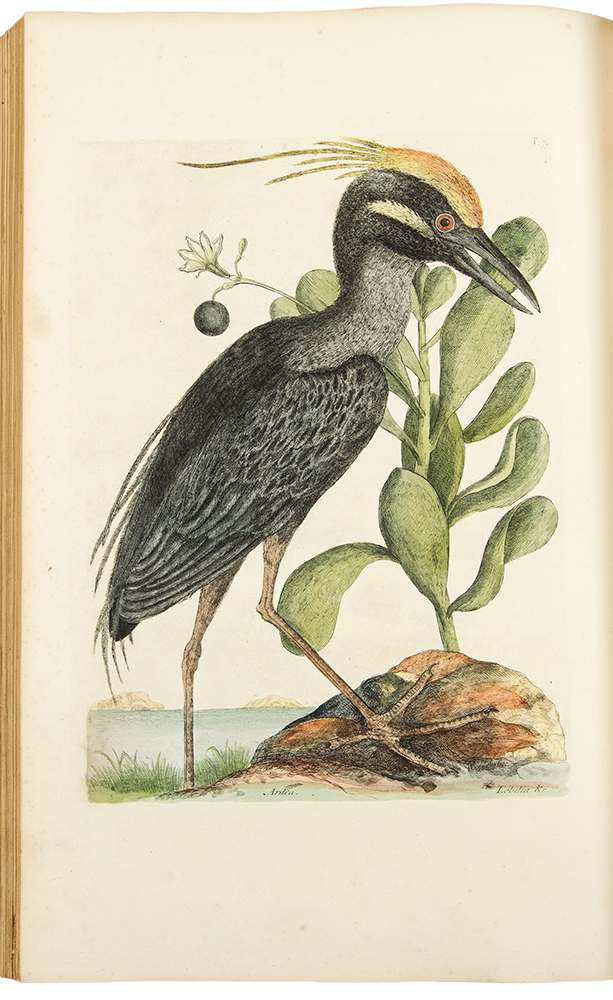 The Natural History of Carolina, Florida, and the Bahama Islands: containing the figures of birds, beasts, fishes, serpents, insects, and plants; particularly, those not hitherto described, or incorrectly figured by former authors, with their descriptions in English and French. Mark CATESBY.