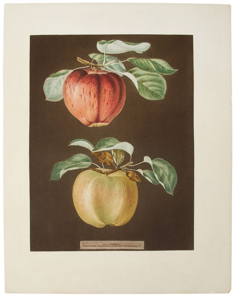 [Apples] Pheonix Apple; Norman's Beauty. After George BROOKSHAW.