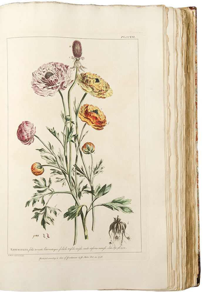 Figures of the Most Beautiful, Useful and Uncommon Plants Described in the Gardeners Dictionary exhibited on three hundred copper plates, accurately engraved after drawings taken from nature, with the characters of their flowers and seed vessels, drawn when they were in their greatest perfection. Philip MILLER.