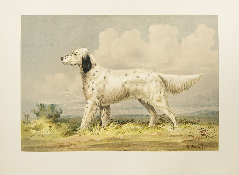 Celebrated Dogs of America. Alexander POPE, Jr.
