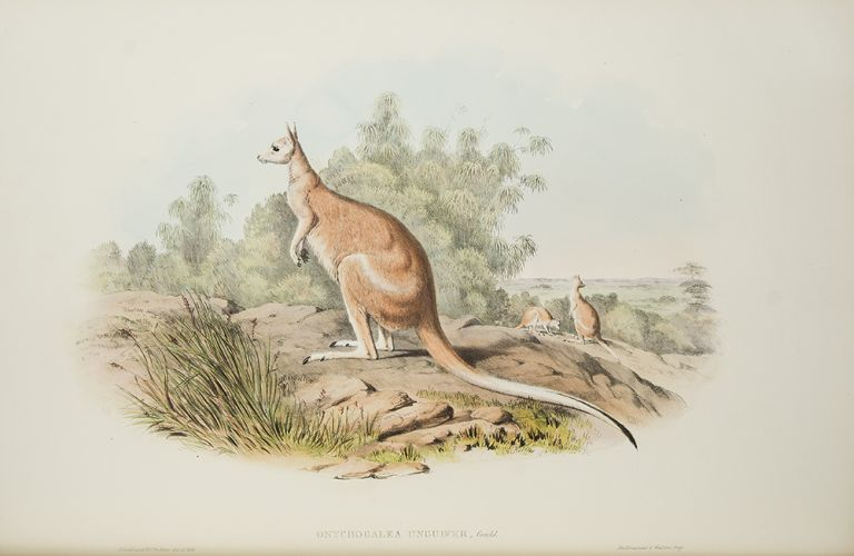 The Mammals of Australia. John GOULD.