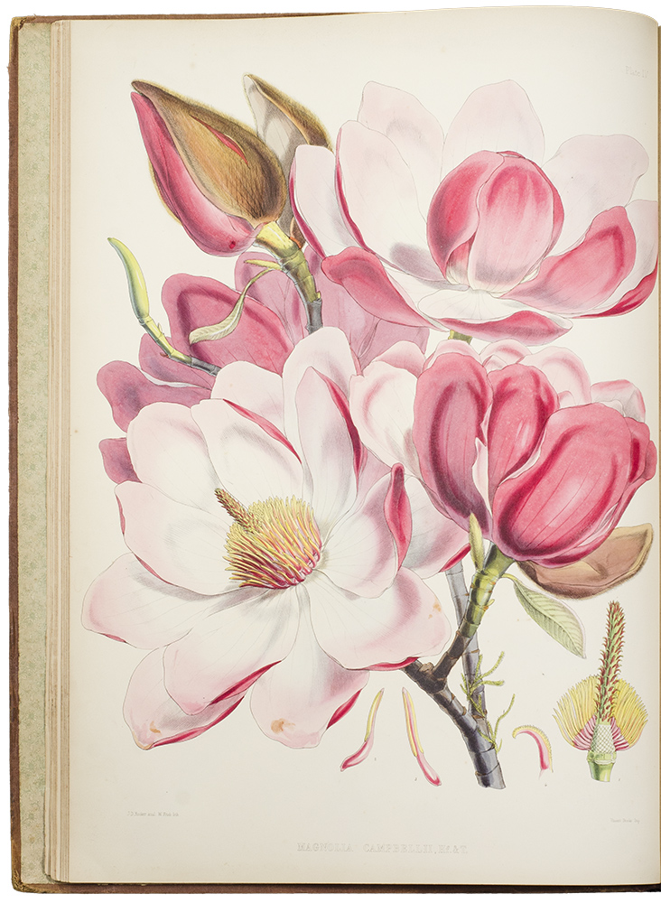 Illustrations of Himalayan Plants, chiefly selected from drawings made for the late J.F.Cathcart Esq. of the Bengal Civil Service. Sir Joseph Dalton HOOKER.