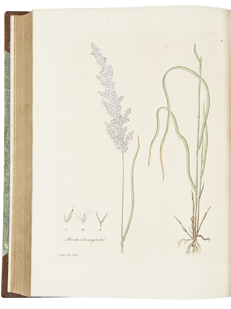 Gramina Britannica; or representations of British Grasses. John Leonard KNAPP.