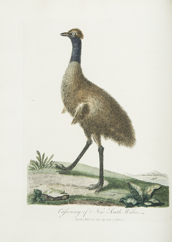 Journal of a Voyage to New South Wales with Sixty-five plates of Non descript Animals, Birds, Lizards, Serpents, curious Cones of Trees and other Natural Productions. John WHITE, c.