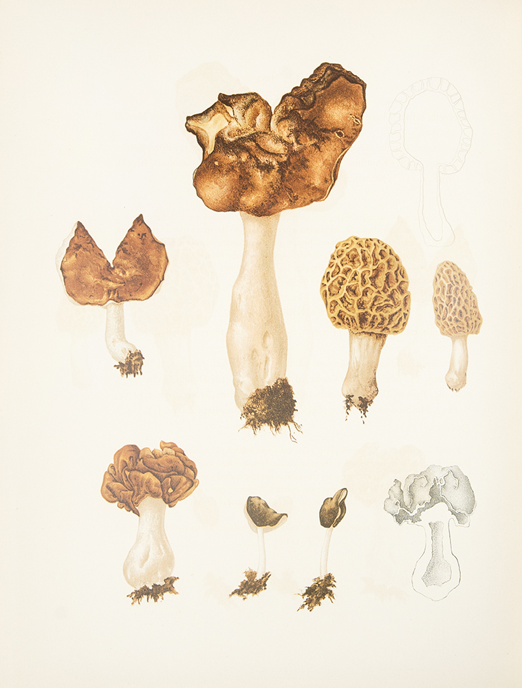 Icones Farlowianae. Illustrations of the Larger Fungi of Eastern North America ... With descriptive text by Edward Angus Burt. William Gilson FARLOW.
