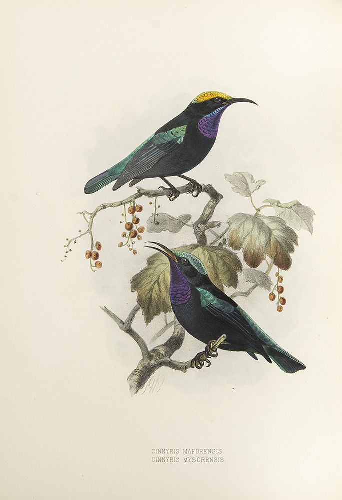A Monograph of the Nectariniidae or Family of Sun-Birds. George Ernest SHELLEY.