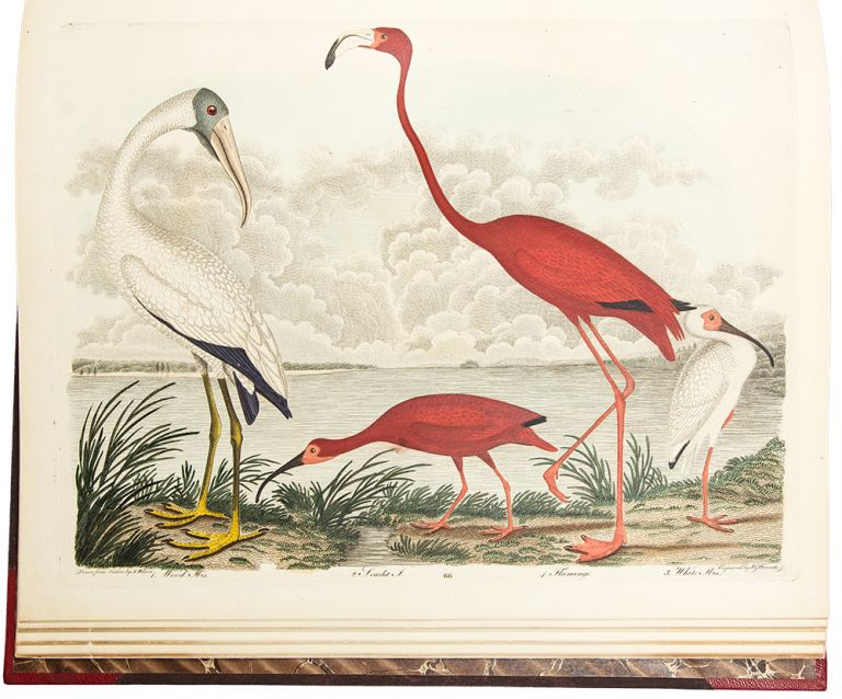 American Ornithology; or the Natural History of the Birds of the United States. Illustrated with plates engraved and coloured from original drawings taken from nature. Alexander WILSON.